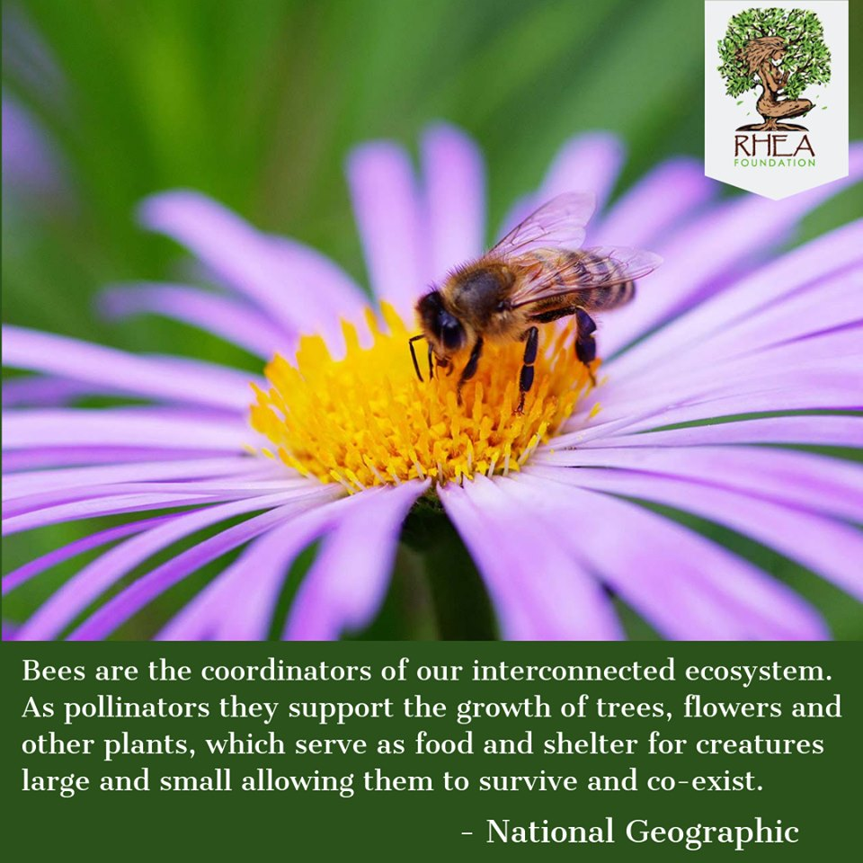 Λεμεσός, Κύπρος - 20 Μαΐου, 2019   Τα Ηνωμένα Έθνη τιμούν σήμερα την συντονίστρια του οικοσυστήματος μας τη μέλισσα που δουλεύει ασταμάτητα και χωρίς παράπονο. Εάν εξαλειφθει η μέλισσα, το οικοσύστημα είναι καταδικασμένο, η παγκόσμια οικονομία θα καταρρεύσει και η ανθρωπότητα θα τελειώσει. Σε ένα κόσμο που δεν πιστεύει πλέον στη μαγεία, μια ματιά έξω σε ένα λουλούδι του κήπο μας μπορεί να μας πείσει διαφορετικά.