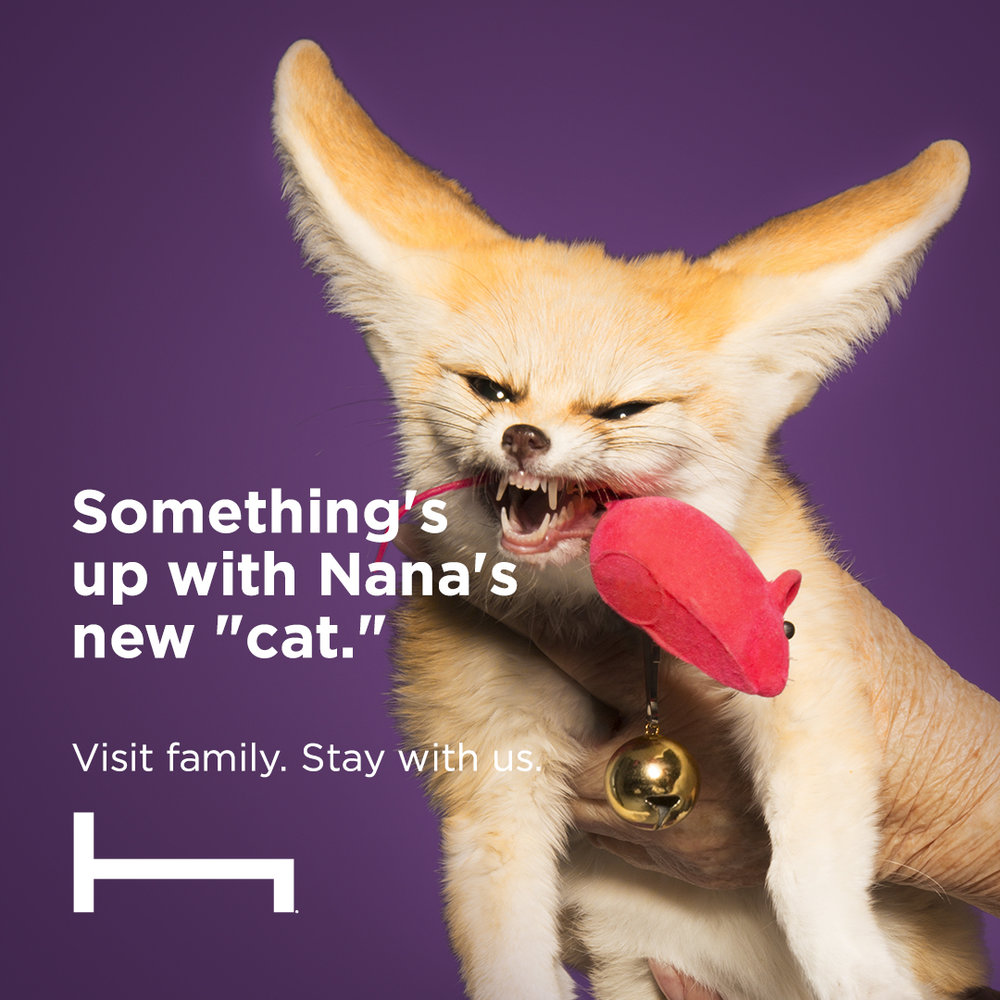 ADWEEK: THE ONLY THING WORSE THAN YOUR RELATIVES? YOUR RELATIVES' PETS.  'Visit family. Stay with us' campaign continues. HotelTonight, a 7-year-old service, launches animal-centric ads this week as a follow-up to last December's cast of wacky relatives whom you probably didn't want to share living space with. If those folks were quirky (and they most certainly were), wait until you get a load of their furry friends.  Read More >