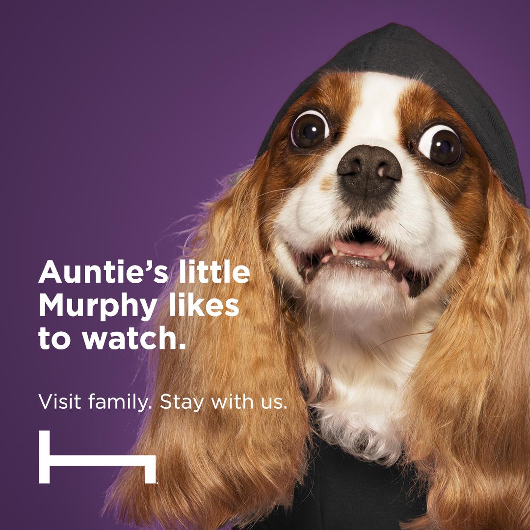 HT-Pets-1080x1080_0005_george 1.52.23 PM.jpg