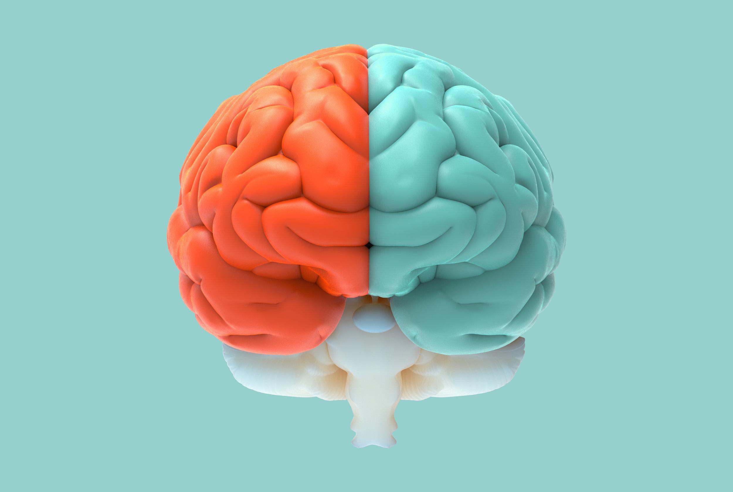 LGBT brain