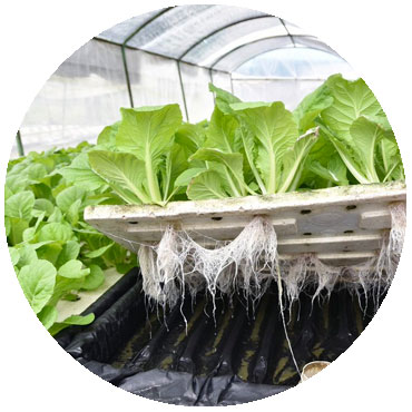 healthy plants with nutrients from fertigation system