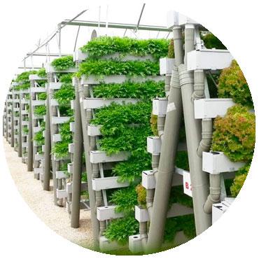 hydroponics to grow plants