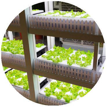 hydroponic led grow lights