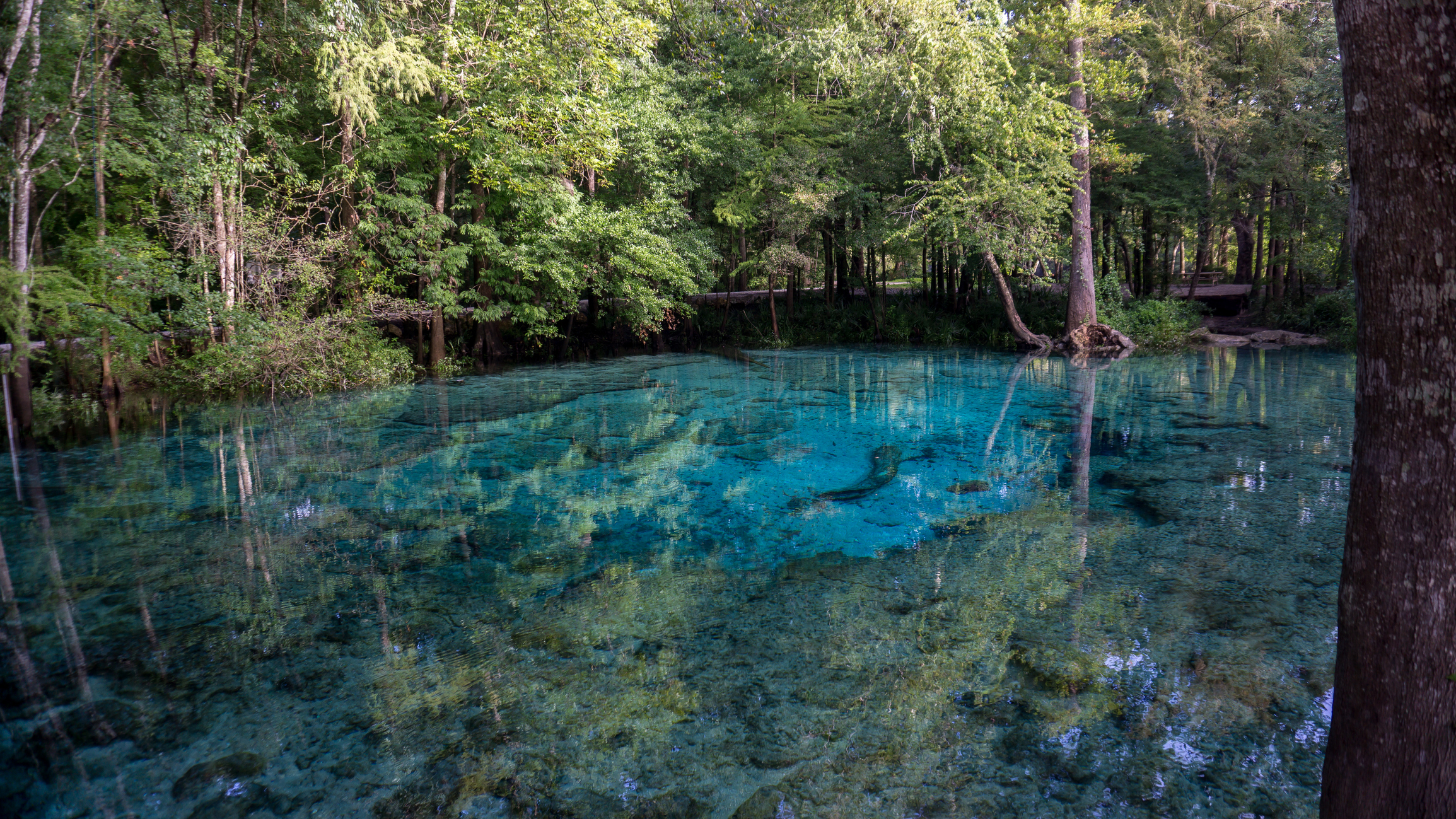 If you're looking to take in more nature, discover  Radium Springs . The largest spring in the state and one of Georgia's seven natural wonders is a sight for sore eyes.
