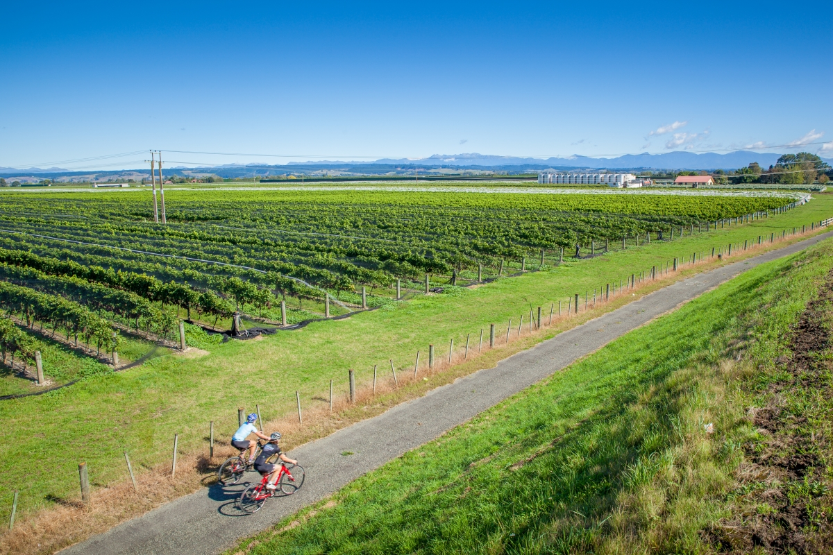 Cyclists near Winery on Tasman's Great Taste Trail - low res.jpg