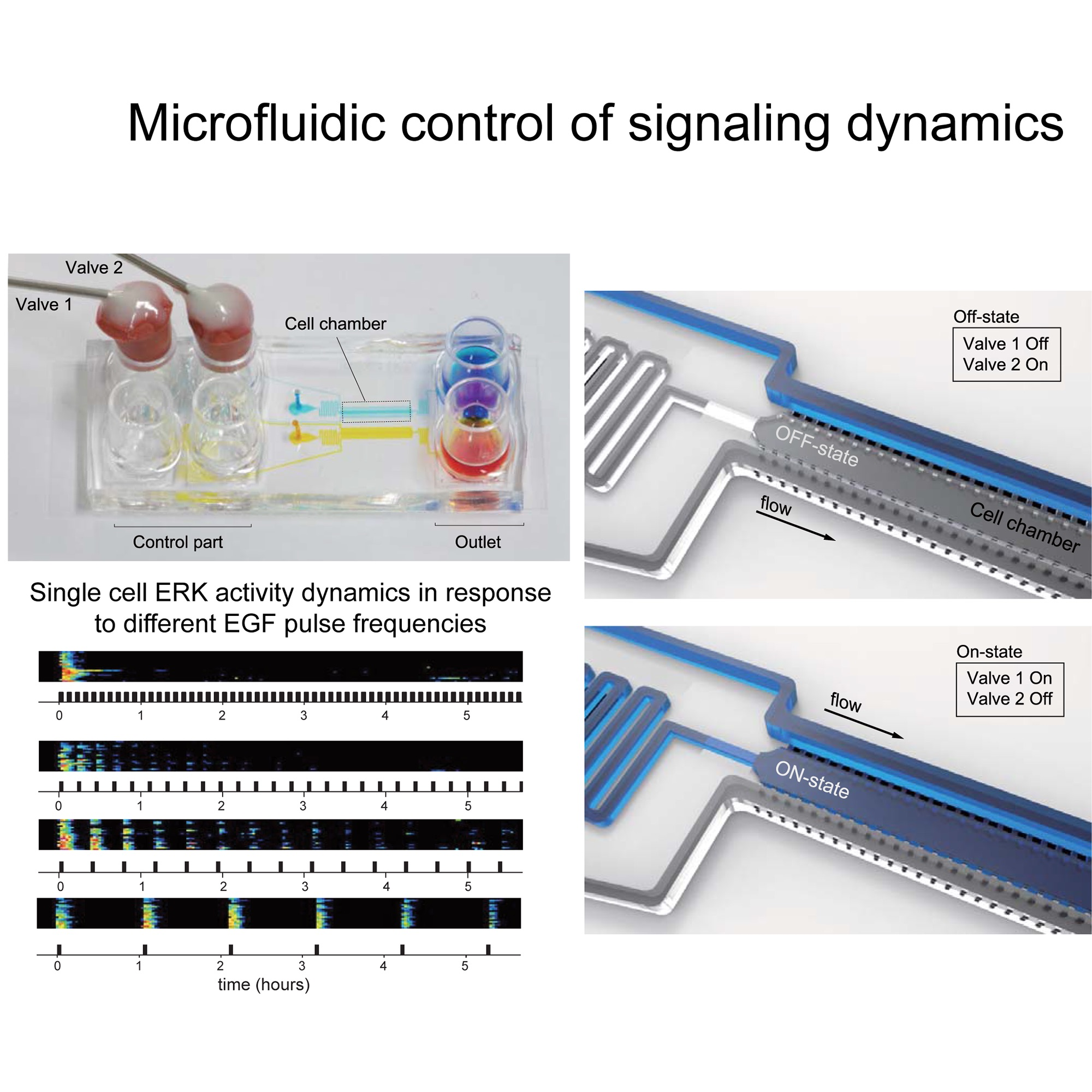 microfluidic control 2000x2000 copy.jpg