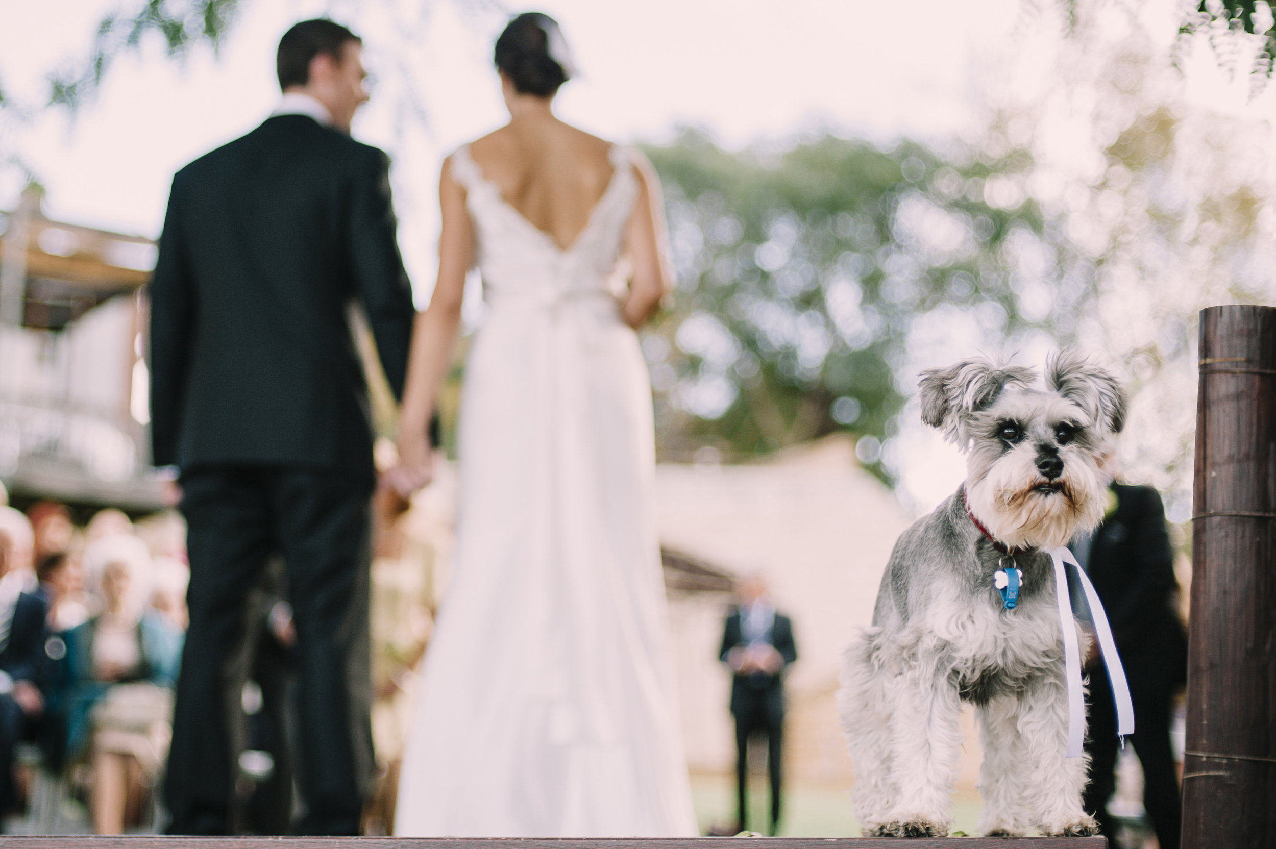 Fur Baby at wedding