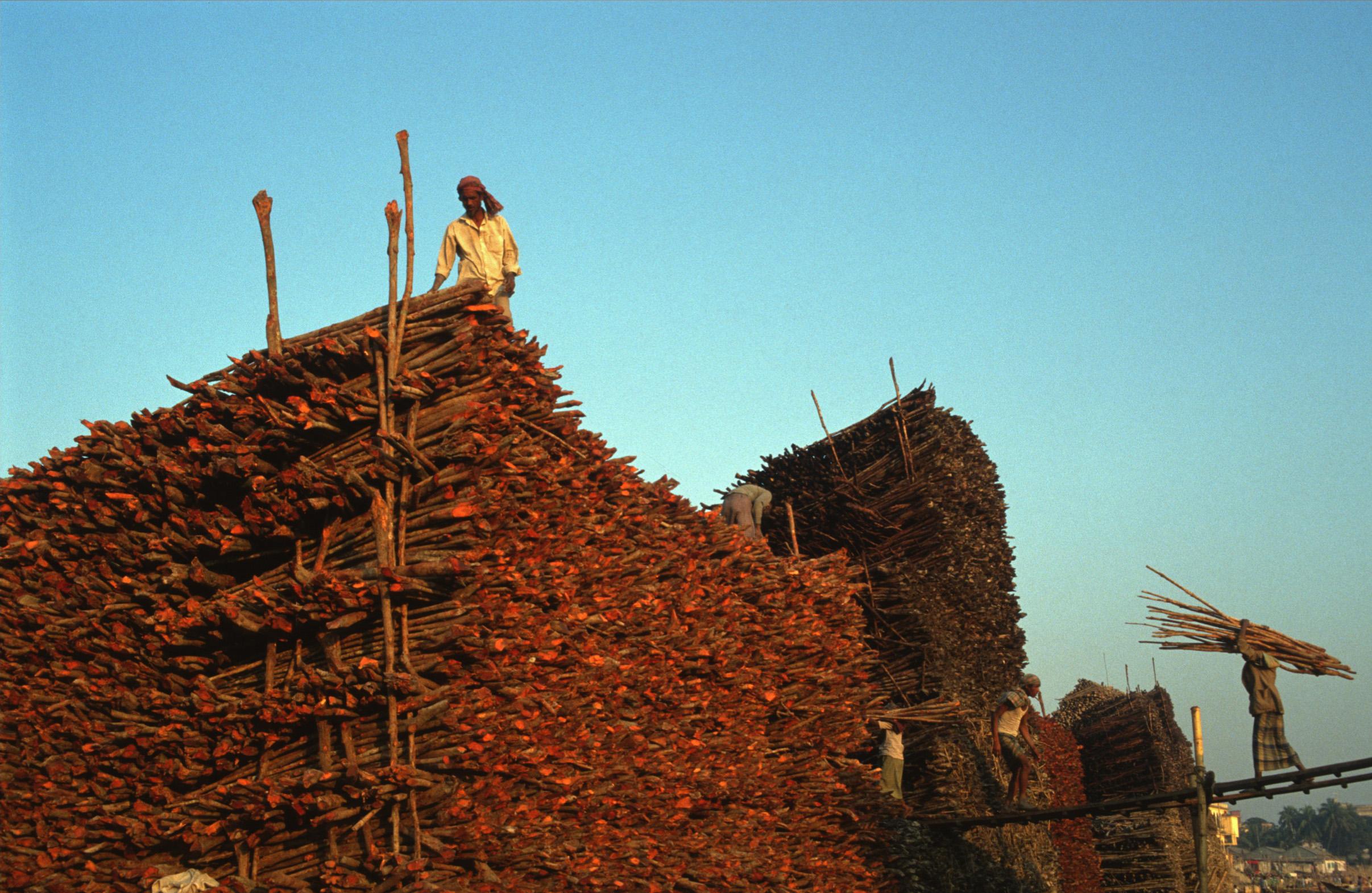 Bangladesh_timber.jpg