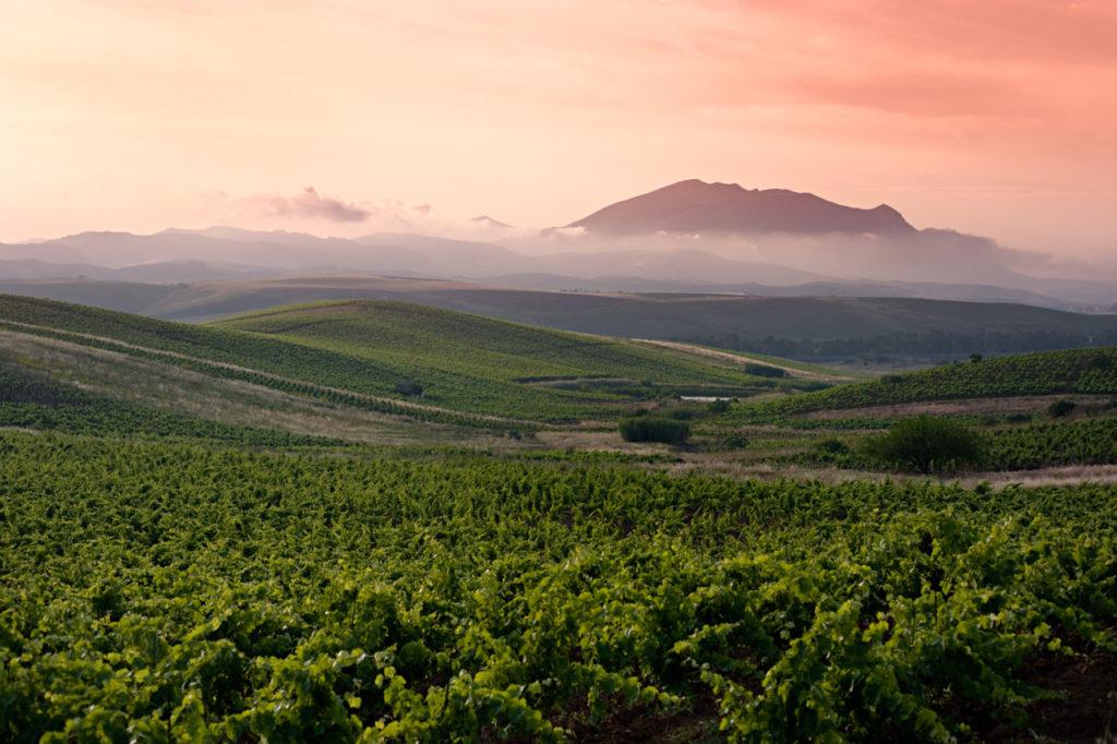 sicily-extensive-vineyard-view-at-sunrise-1024x682.jpg