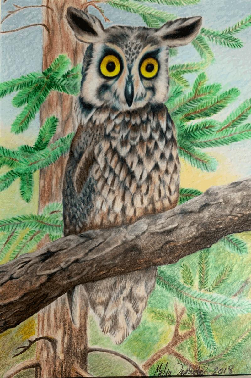Permanently Astonished Owl (PAO)
