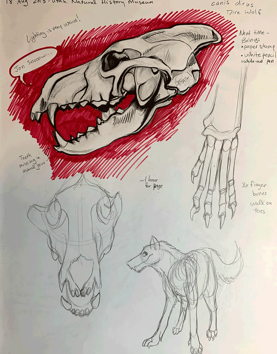 Dire wolf sketches