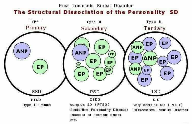 "Image Description: Heading reads ""The Structural Dissociation of the Personality"" and gives three types in overlapping circles. The first is Type 1, or Primary, and has only an ANP and an EP, with its caption labeled as PTSD. The Second is Type I, or Secondary, and has only one ANP but multiple EP's, with its caption labeled as OSDD or Borderline Personality. The third is Type III, or Tertiary, with several ANP's and multiple EP's, and captioned as representing complex PTSD and DID."
