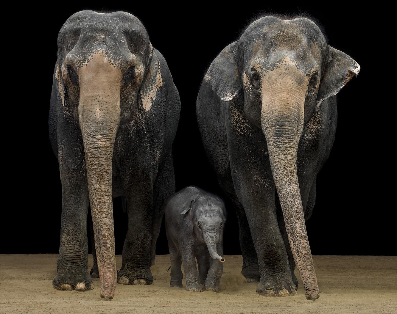 ….Tierfotografie..Animal Photography….