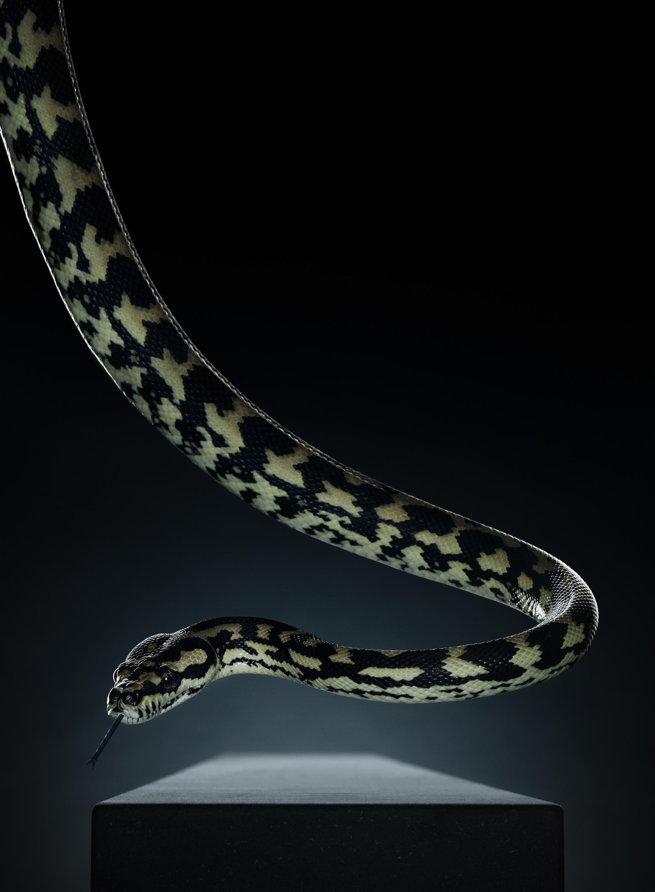 Snake, (218 cm x 160 cm)
