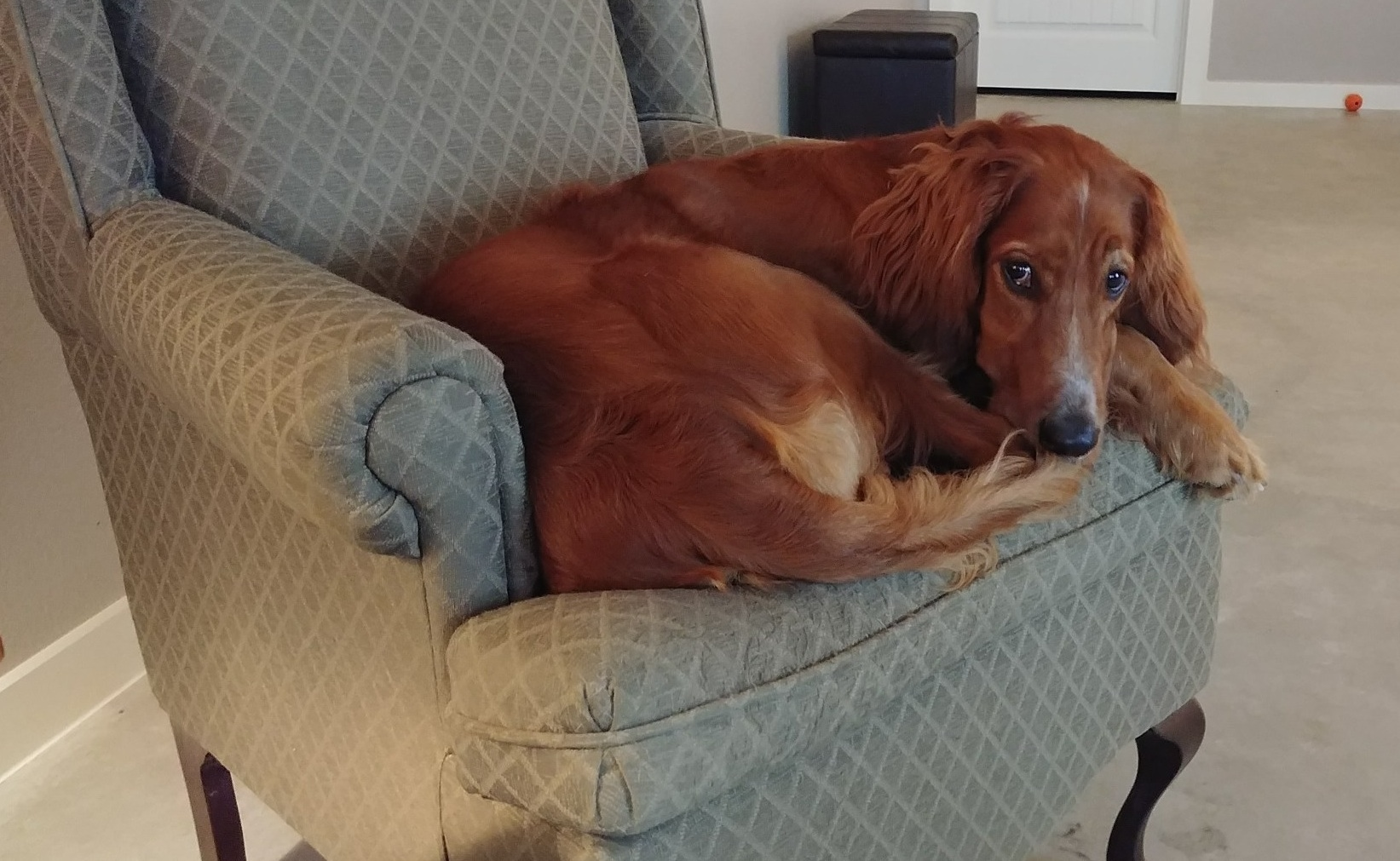 Libby resting in chair.jpg