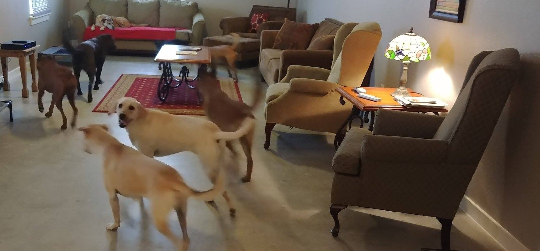 Dogs in lounge area 2.jpg