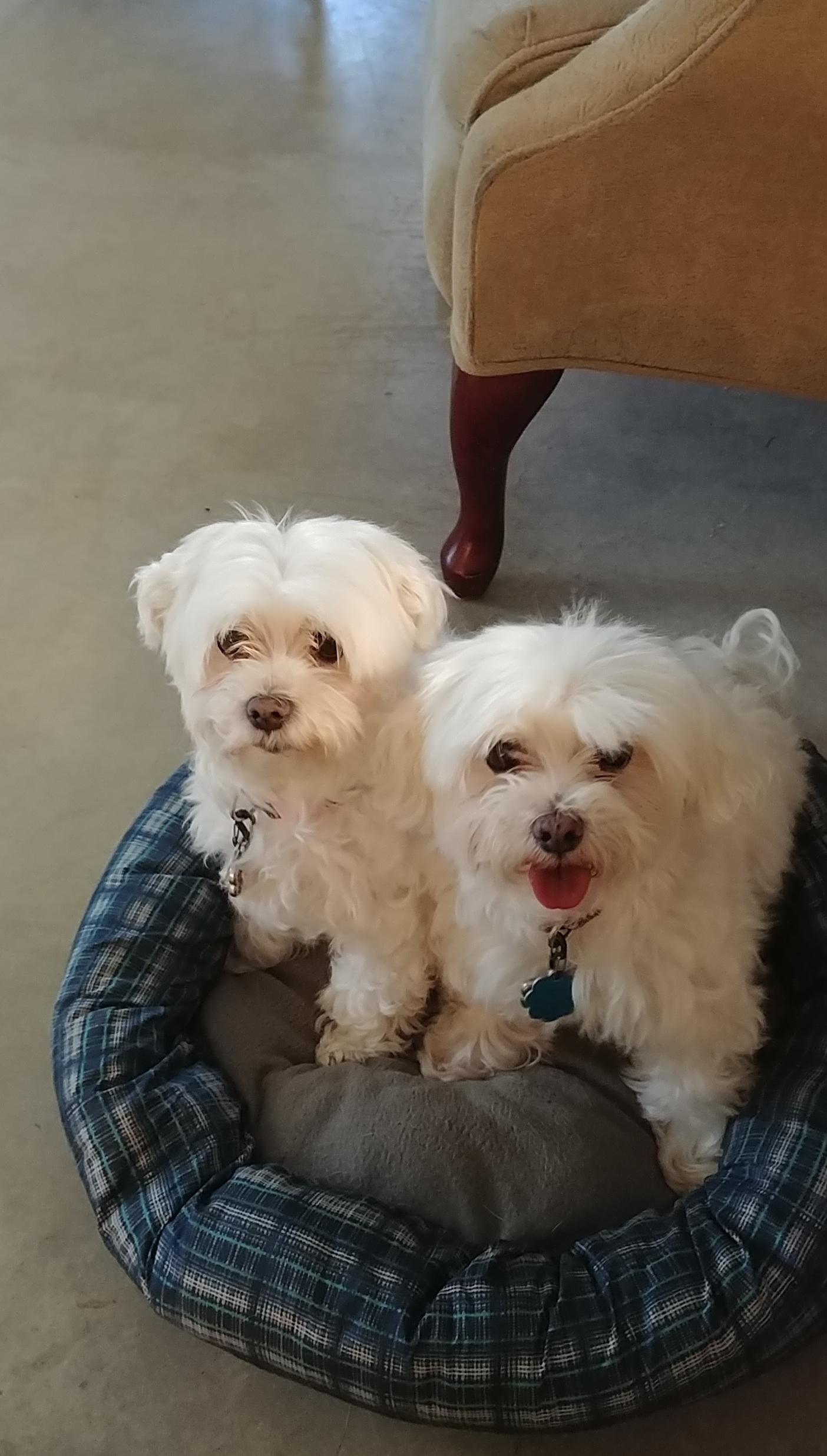 Sophie & Mandy.jpg