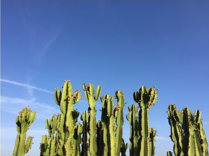 25_cactus.jpg