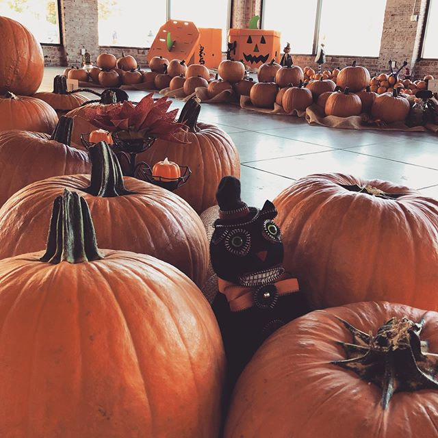 Patchin with the littles 🎃🧡 we are still open and ready for some pumpkin carving fun! Come on by 🤗 #downtownfresno #peerlesspumpkinpatch #fresno #pumpkinpatch