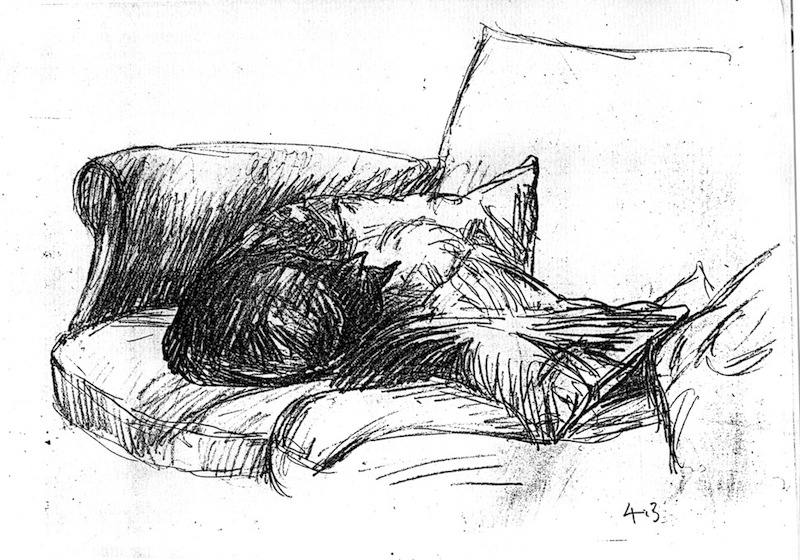 Cat Aslkeep in the Corner of the Sofa (pencil drawing) ©irenejuliawise