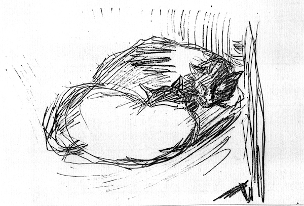 Two Cats Asleep (line drawing) ©irenejuliawise