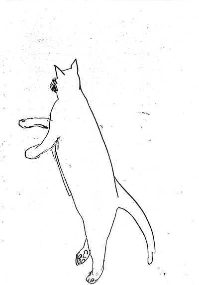 Jumping Cat (line drawing) ©irenejuliawise