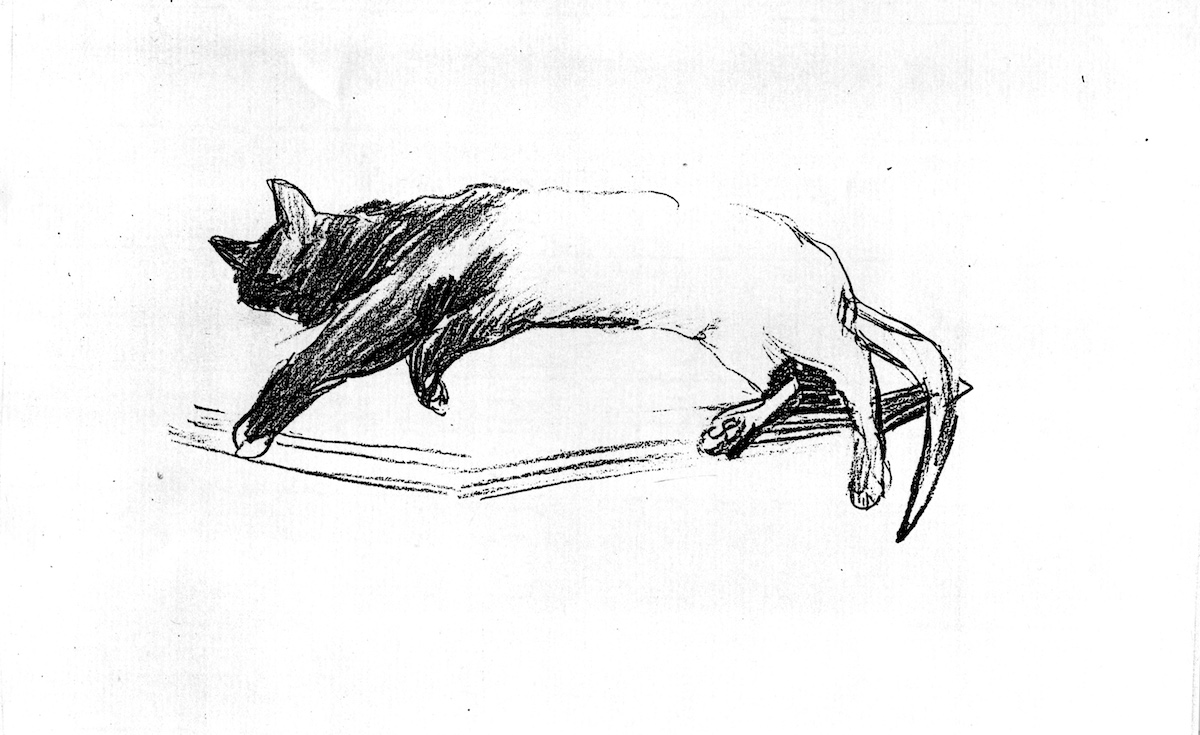Long Sleeping Cat (pencil drawing) ©irenejuliawise