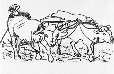 Global Development, Working the Land with Cattle ©irenejuliawise