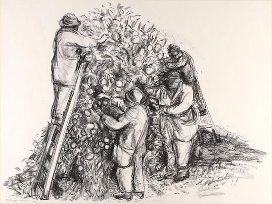 Orange Pickers (charcoal drawing) ©irenejuliawise