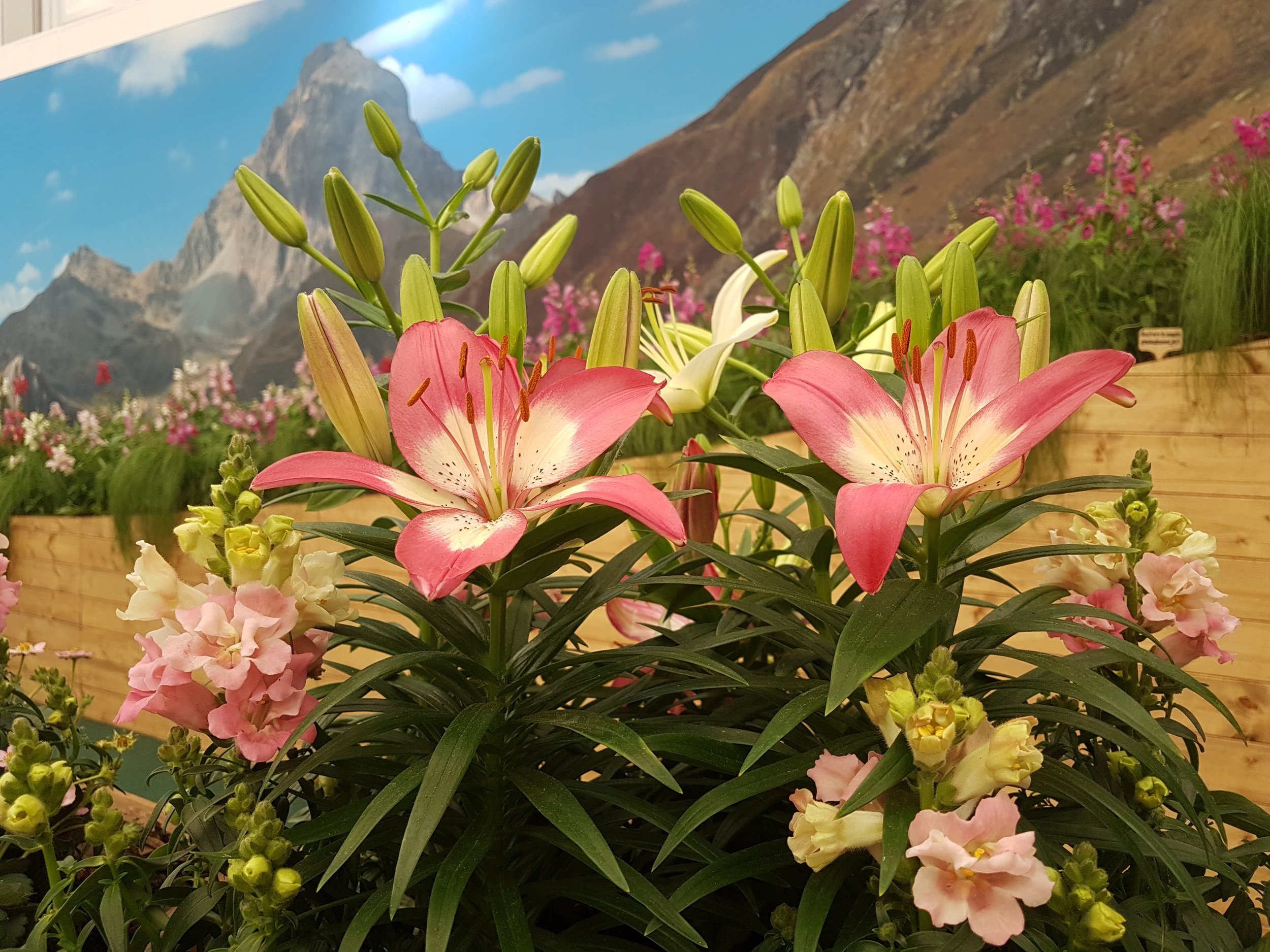 Lillies in the Valley
