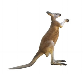 100736747-red-kangaroo-on-white-background-isolated.jpg