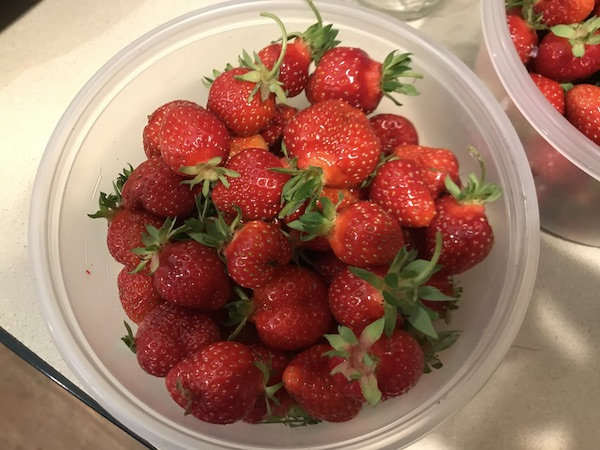 Strawberries2019.jpg