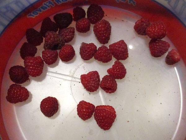 FirstRaspberries.jpg