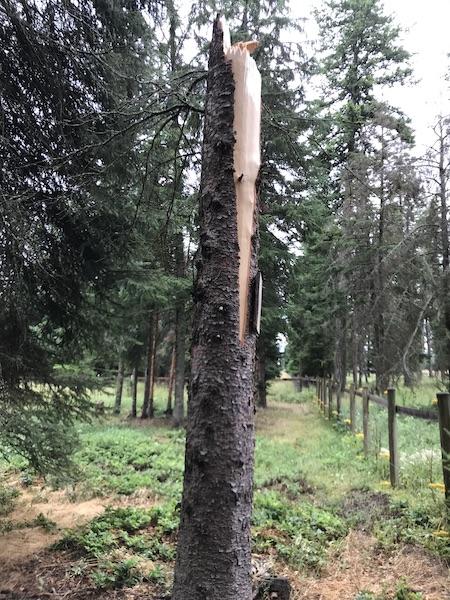 TreeDown5.jpg