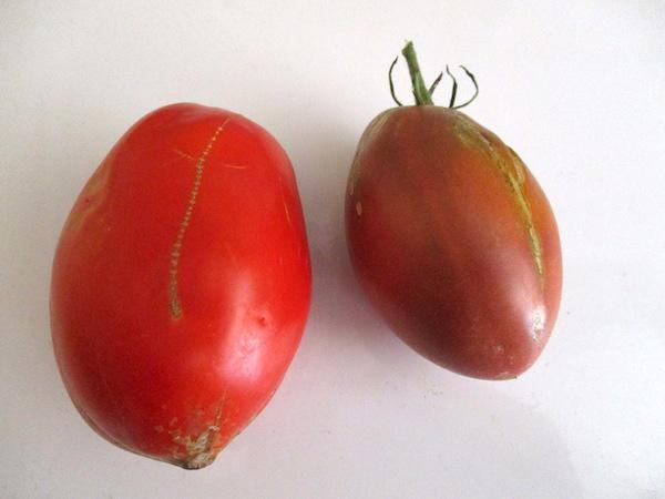 PasteTomatoes.jpg