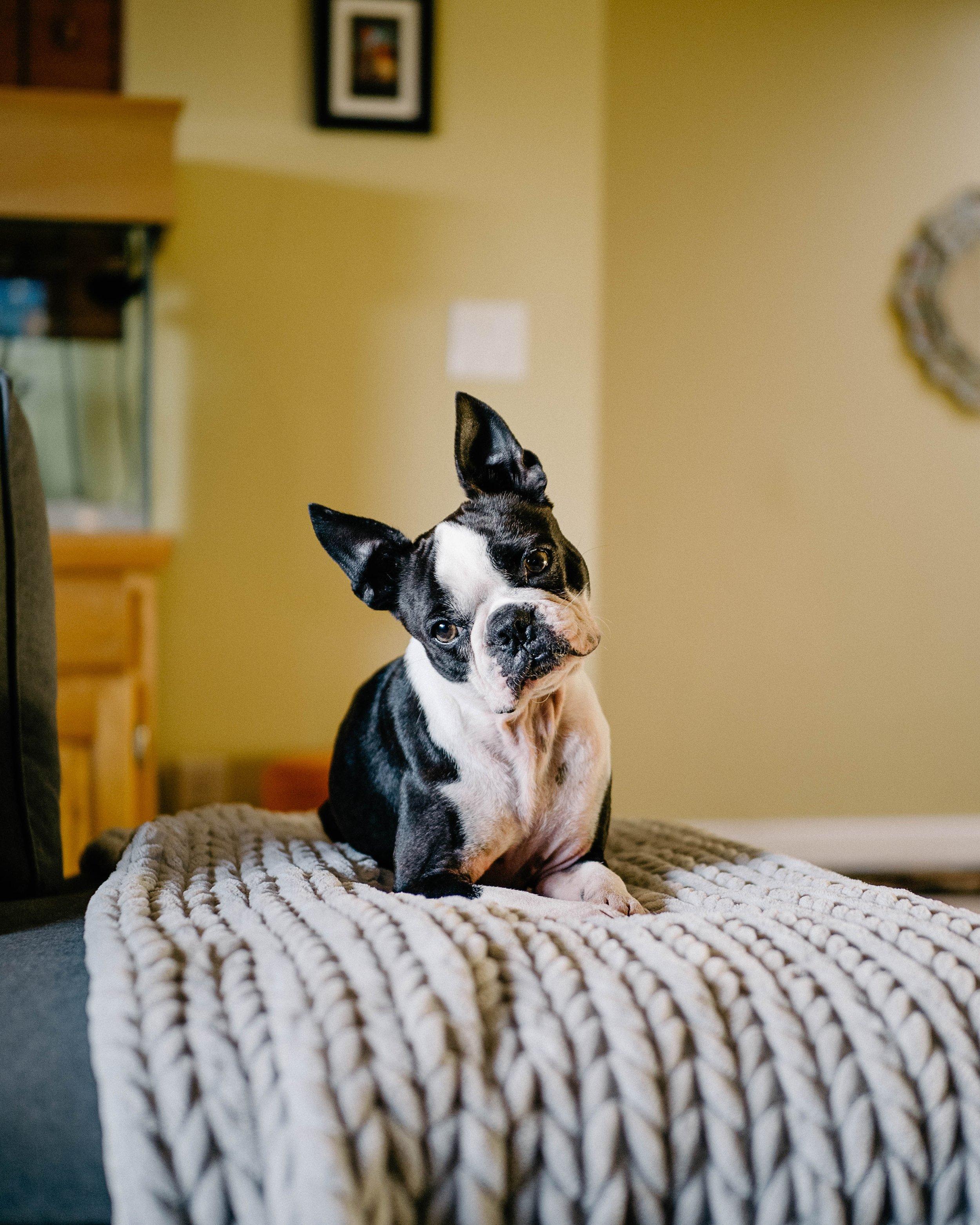 Puppy on couch.jpg