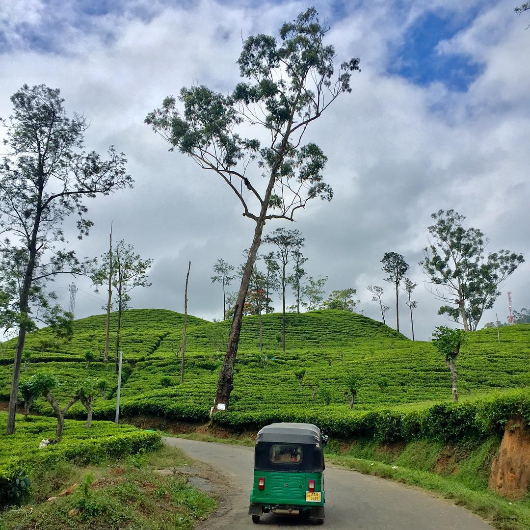 Stay Tuned…Trips to Sri Lanka this  Dec/Jan 2019-2020 - Have you ever imagined yourself speeding down a jungle coastline in a train? How about hopping on a Tuk-Tuk to get some breakfast after a morning surf session? Sipping freshly picked tea overlooking the highland tea farms? Trains, Tuk-tuk's, surfing, yoga, elephants and amazing cuisine is only a fraction of what Sri Lanka has to offer.We're hard at work putting trips to Sri Lanka together for December and January 2019/2020. Contact us for more information