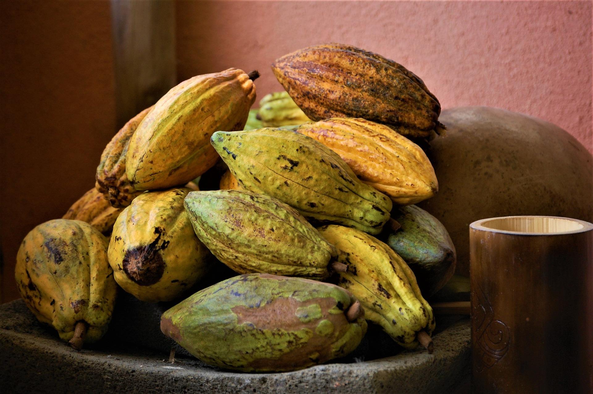 cacao-3707275_1920.jpg