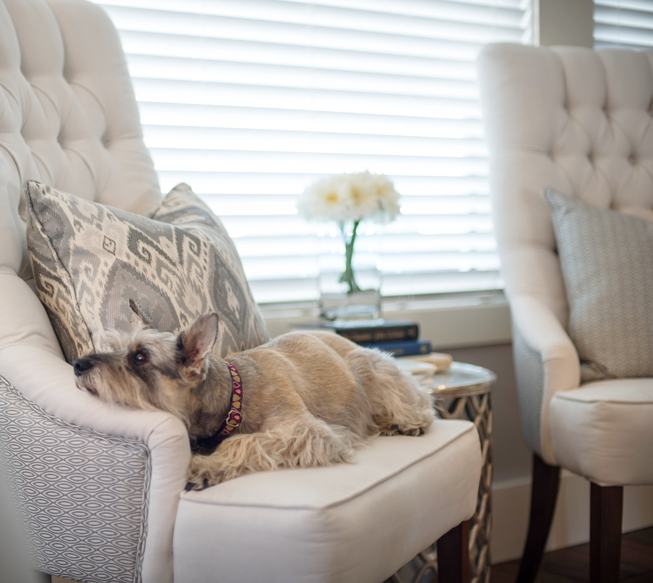WHITE UPHOLSTERED CHAIR WITH IKAT PATTERNED PILLOW, LIVING ROOM DECOR, GRAY AND WHITE DECOR, INTERIOR DESIGNS BY ADRIENNE, CRANBROOK BC