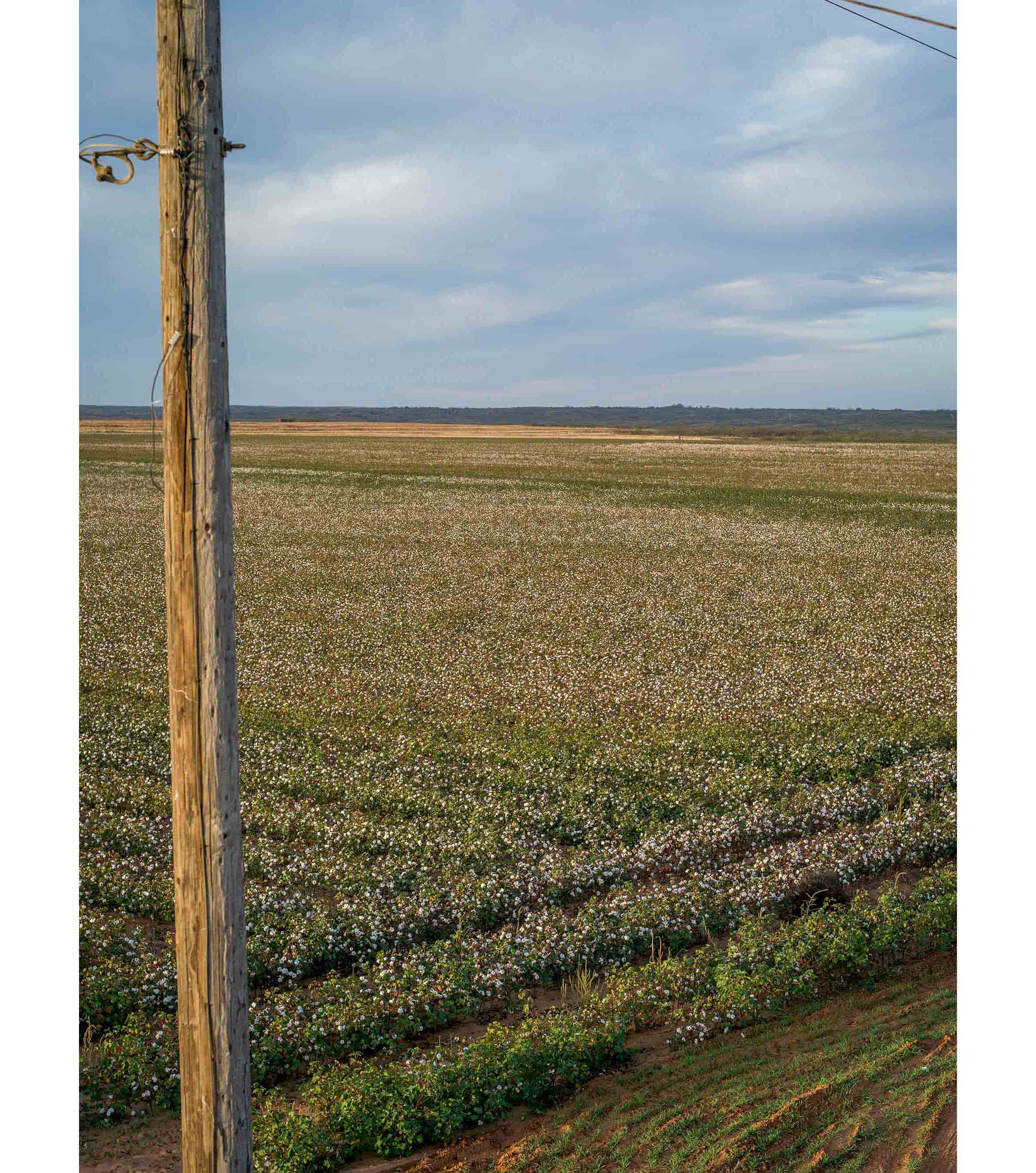 Cottonfields09.jpg
