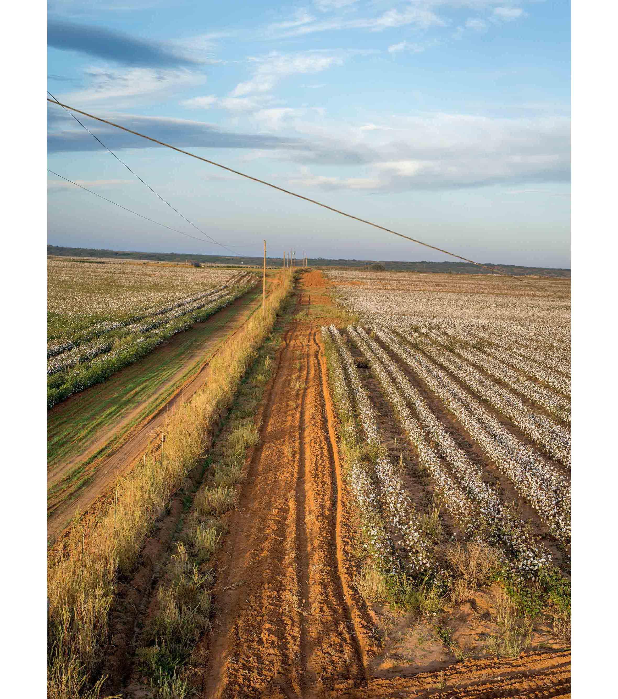 Cottonfields12.jpg
