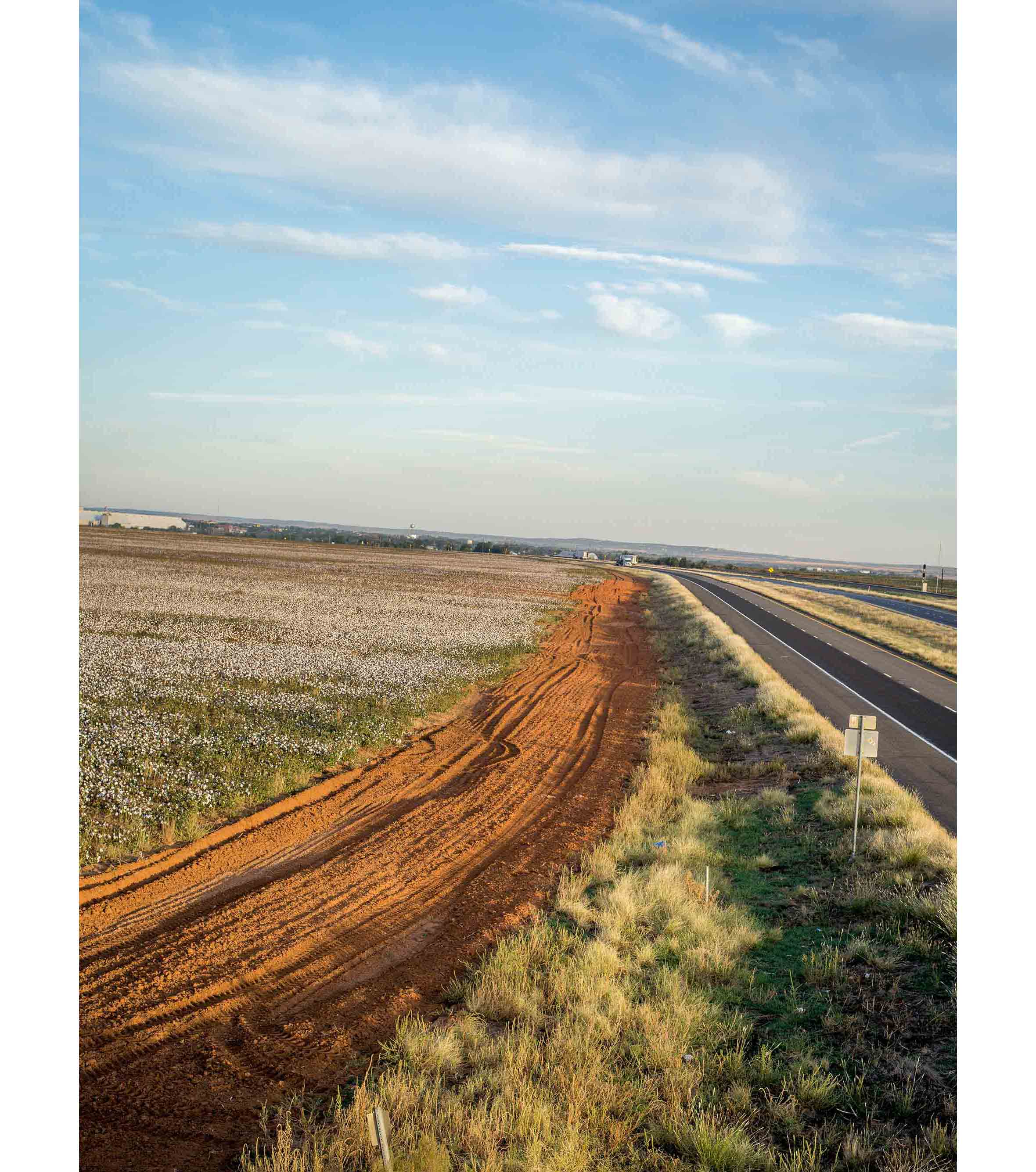 Cottonfields16.jpg