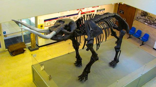 asu-museum-05131013-c169-alr-2003.jpg