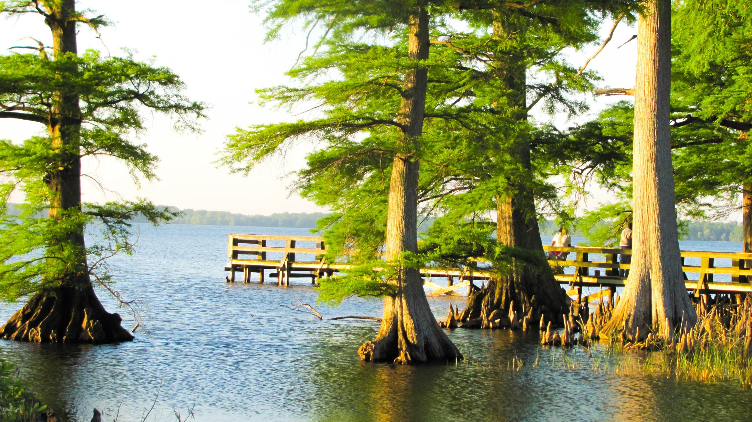 Reelfoot Lake State Park Tiptonville, Tennessee