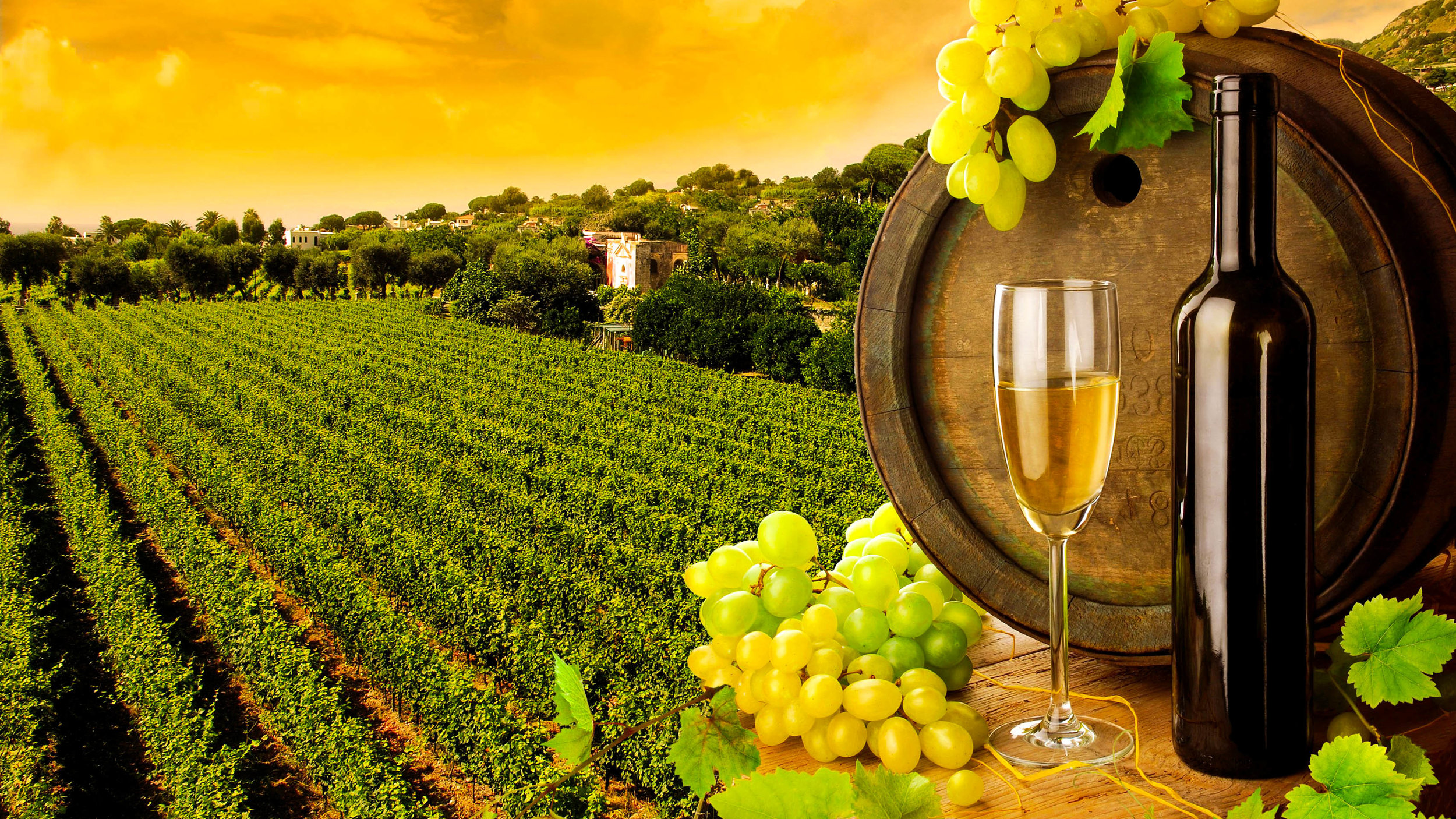 vineyards-c169-alr-1.jpg