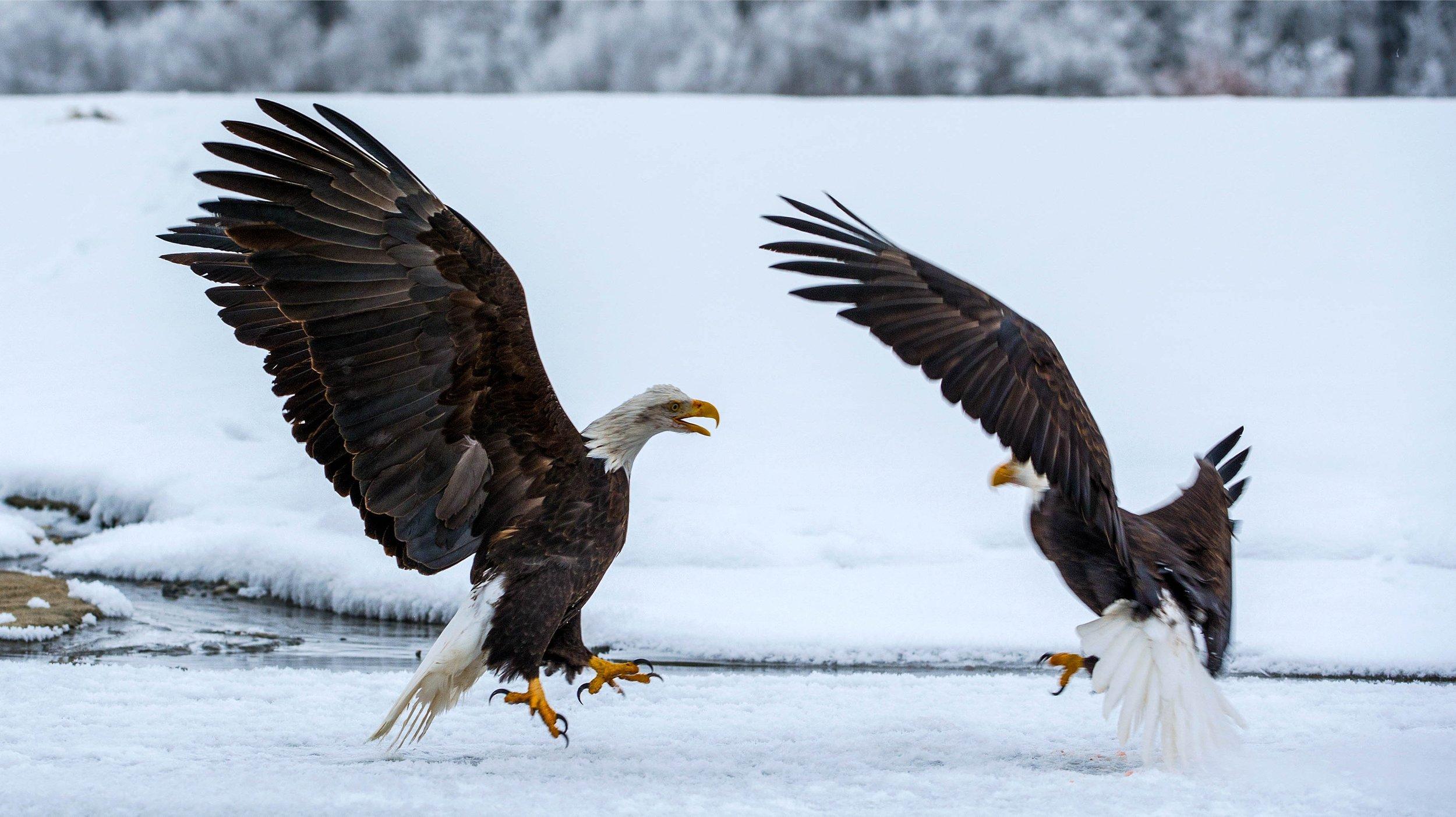 two-eagles-alr-.jpg