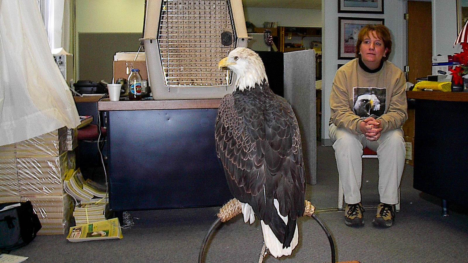 alton-eagle-01052002-alr-c169-1700.jpg