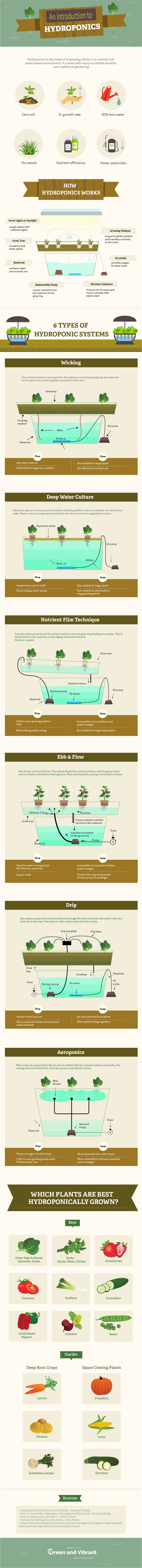 An Introduction to Hydroponics infographic