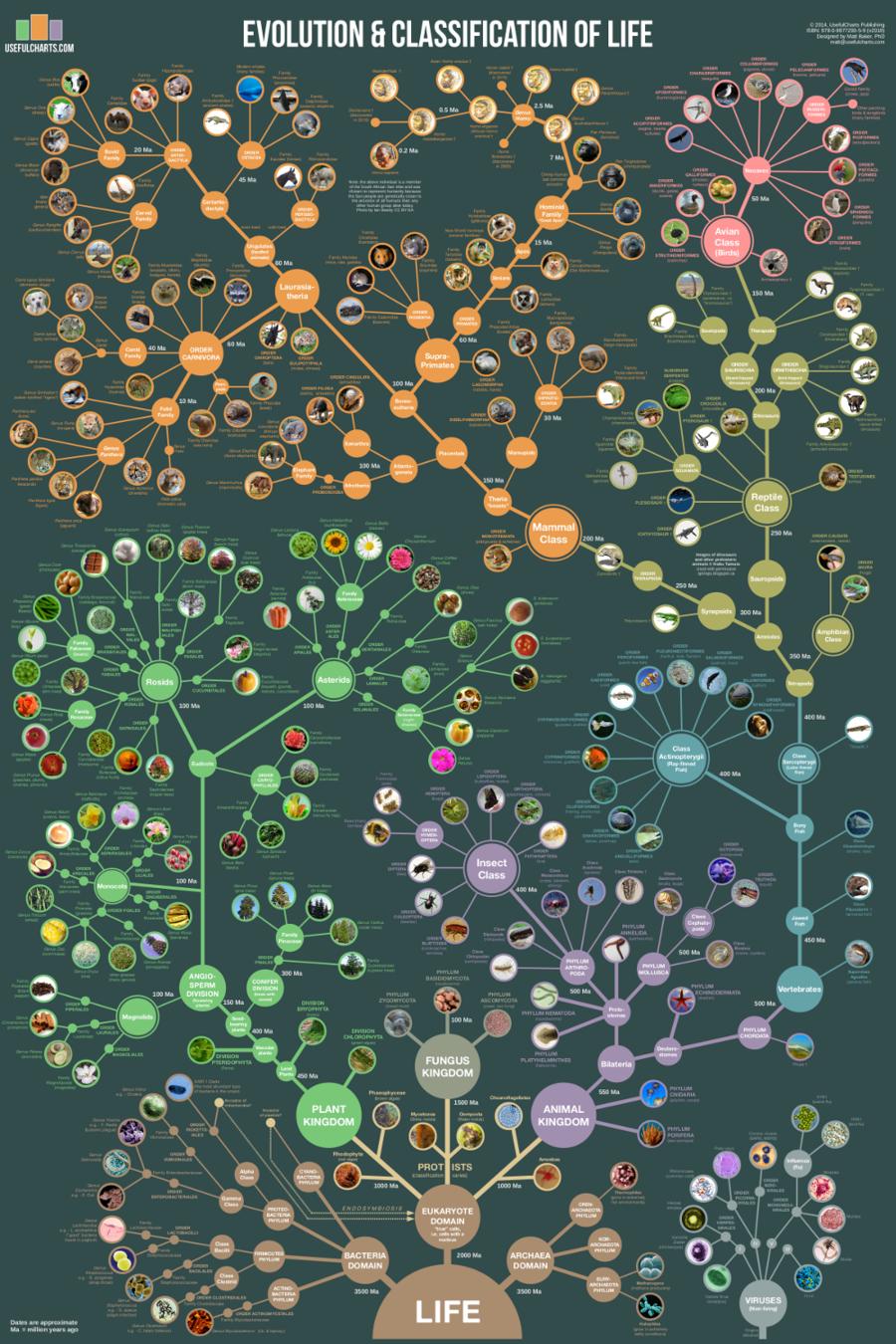 Evolution * Classification of Life