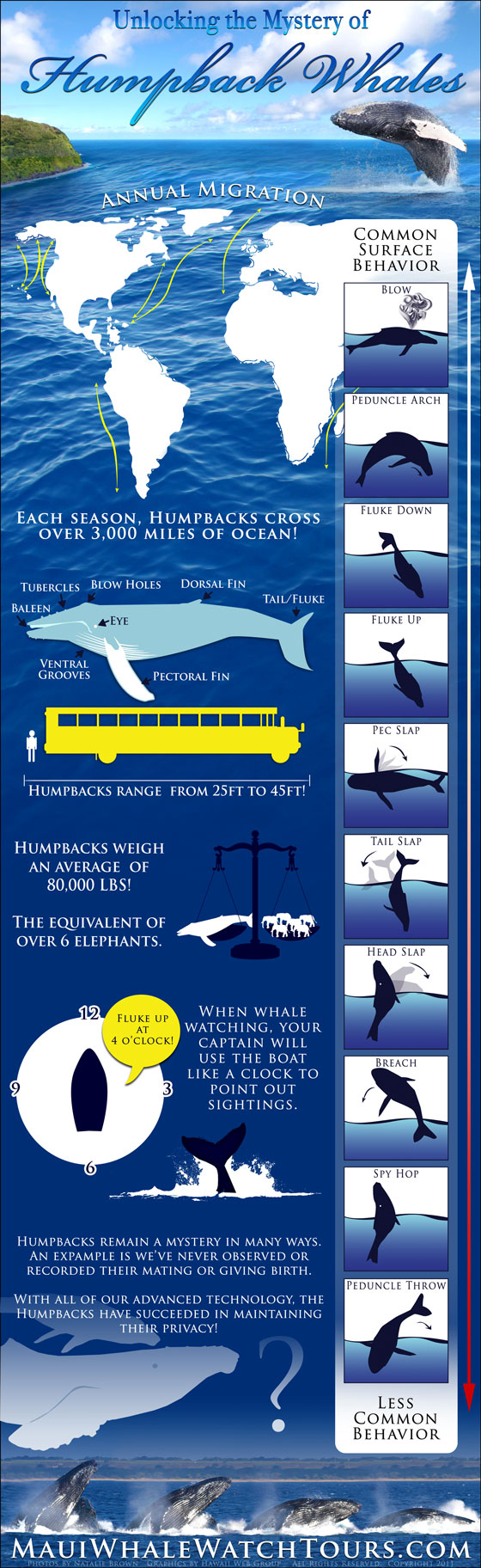 Unlocking the Mystery of Humpback Whales infographic